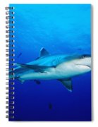 Silvertip Shark In Thailand Spiral Notebook