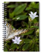 Simmons Park Peacock Spiral Notebook
