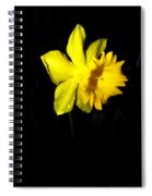 Simply Daffodil Spiral Notebook