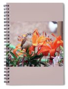 Singing Wren In The Lilies Spiral Notebook