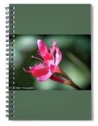 Single Beauty Spiral Notebook