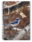 Single Blue And Available Spiral Notebook