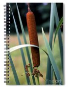 Single Cattail Spiral Notebook