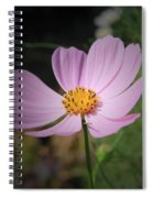 Single Cosmos Spiral Notebook