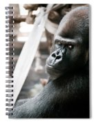 Single Gorilla Sitting Alone Spiral Notebook