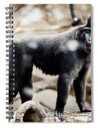 Single Macaque Monkey Standing Spiral Notebook