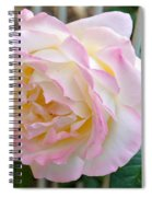 Single Peace Rose Spiral Notebook