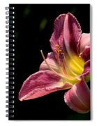 Single Pink Day Lily Spiral Notebook