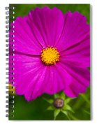 Single Purple Cosmos Flower Spiral Notebook
