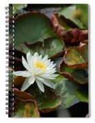 Single Water Lilly  Spiral Notebook