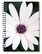 Single White Daisy Macro Spiral Notebook