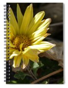 Single Yellow Mum Spiral Notebook