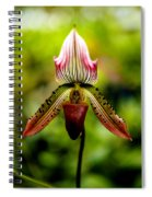 Singular Beauty Spiral Notebook