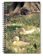 Sitting Ducks Spiral Notebook