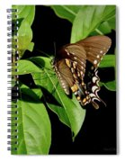 Sitting In The Morning Sun Spiral Notebook