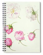 Six Heads Of Old Fashioned Roses Spiral Notebook