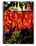 Sizzling Sumac Spiral Notebook