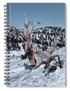 Skating Pine Spiral Notebook