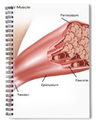 Skeletal Muscle Structure Spiral Notebook