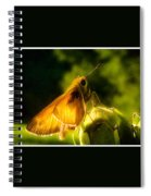Skipper Butterfly With Sun Shine Spiral Notebook