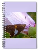 Skipper Butterfly With White And Orange Colors Spiral Notebook
