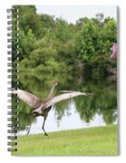 Skipping Sandhill Crane By Pond Spiral Notebook