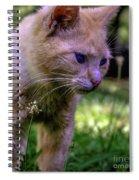 Skippy Feral Cat Portrait 0369b Spiral Notebook