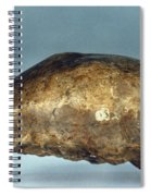 Skull Of Java Man Spiral Notebook