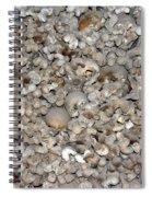 Skulls And Bones Spiral Notebook