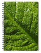 Skunk Cabbage Leaf Spiral Notebook