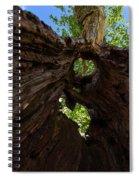 Sky View Through A Hollow Tree Trunk Spiral Notebook