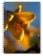 Skylit Lily Spiral Notebook