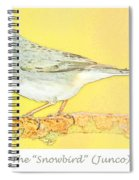 Slate Colored Junco The  Spiral Notebook