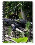 Sleeping Alligator Spiral Notebook