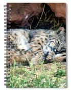 Sleeping Bobcat Spiral Notebook