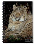 Sleepy Bobcat Spiral Notebook