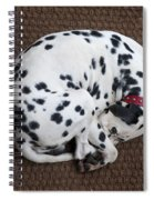 Sleeping Dalmatian II Spiral Notebook