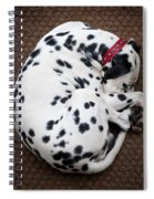 Sleeping Dalmatian Spiral Notebook