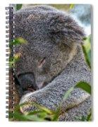 Sleeping Koala - Canberra - Australia Spiral Notebook