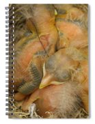 Sleeping Robins Spiral Notebook