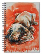 Sleeping Spaniel On The Red Carpet Spiral Notebook
