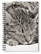 Sleeping Tabby Spiral Notebook