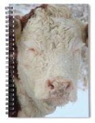 Sleepy Winter Cow Spiral Notebook