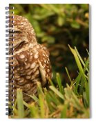 Sleepy Owl Spiral Notebook