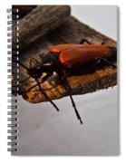 Sliding Beetle Spiral Notebook
