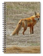 Sly Fox 5785 Spiral Notebook
