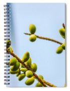 Small Coconuts I Spiral Notebook