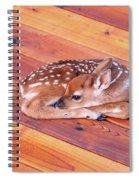 Small Deer Fawn Resting On Cedar Wood Deck Spiral Notebook