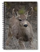 Small Fawn In Tombstone Spiral Notebook