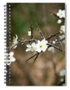 Small White Flowers Of Thorns Spiral Notebook